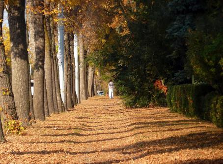 Beauty in Fall Leaves