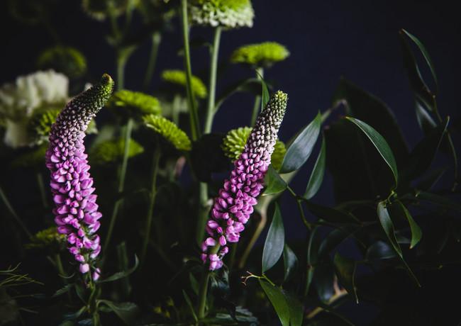 pink veronica-rosa_veldkamp-1.jpg