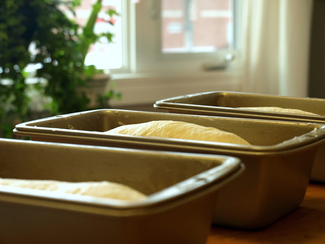 bread dough in pans