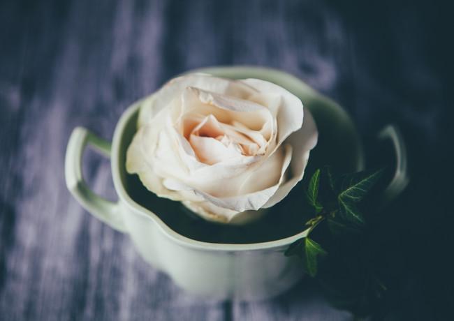 rose in green_rosa_veldkamp-1.jpg
