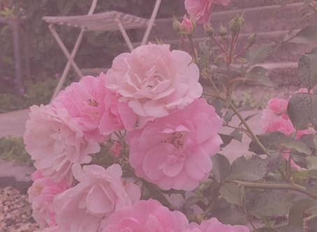 Dreamy Roses