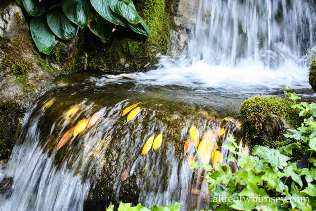 Waterfall, autumn leaves