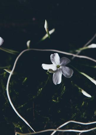 J for jasmine-rosa_veldkamp-1.jpg