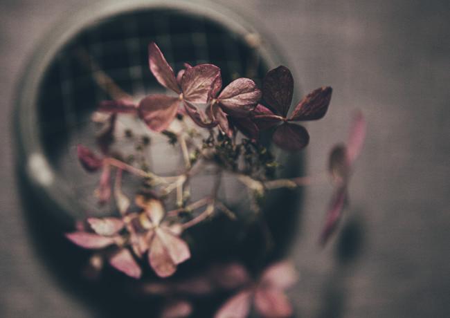 P for Petals lighter-rosa_veldkamp-1.jpg
