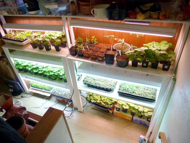 plants under lights