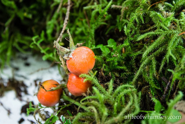 fall moss wreath