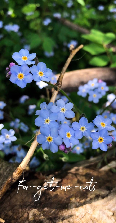 Tiny blue flowers-rosa_veldkamp