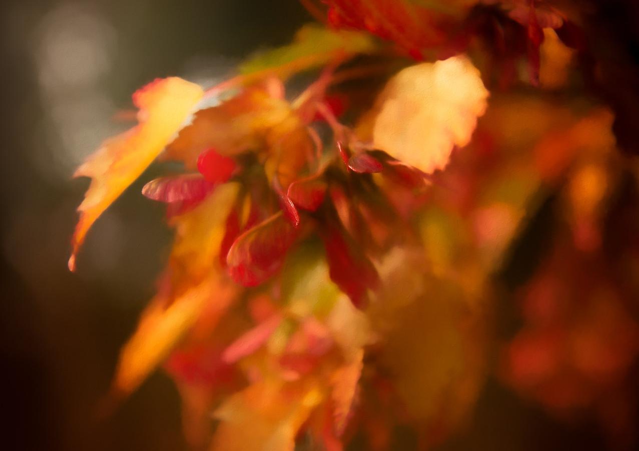 fall leaves-Rosa_veldkamp-1.jpg
