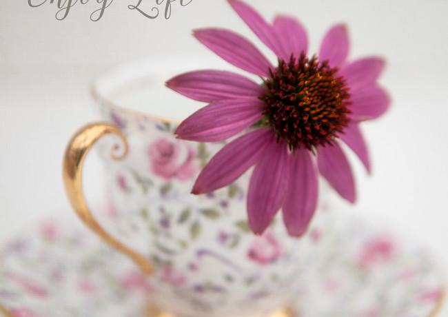 Pink cone flower in tea cup.jpg