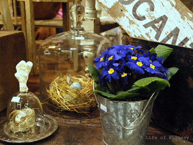 vintage birds nests and cloches,  northwest flower and garden show