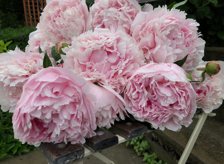 A Peony Giveaway!
