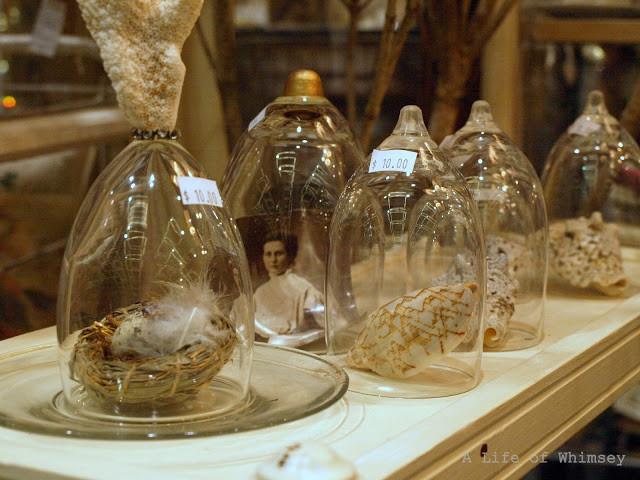 Vintage cloche, picture, nest, shells,  northwest flower and garden show
