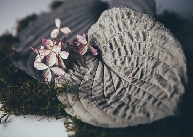 L for leaves_rosa_veldkamp-1.jpg