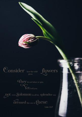 T for tulip-_rosa_veldkamp-1.jpg
