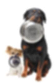 chiens gamelles.jpg