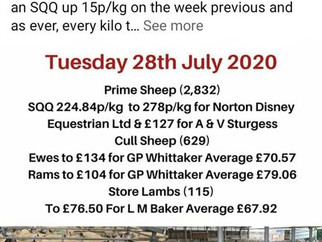 Oxford cross lambs top Melton at £127