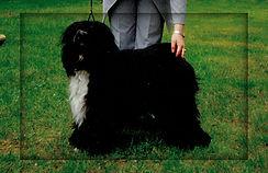 Dog POwer's Black Russian.jpg