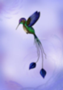 kolibri WZ.jpg