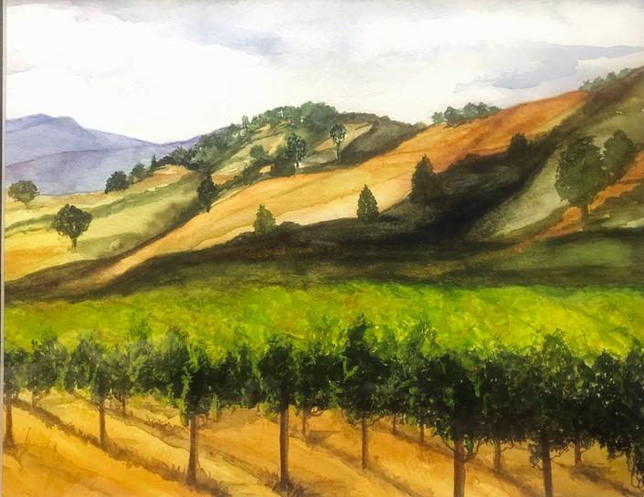 Palouse Wine Hills