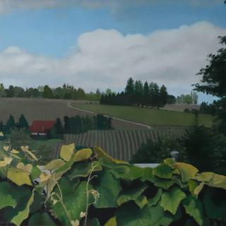 Dundee Hills Vineyard