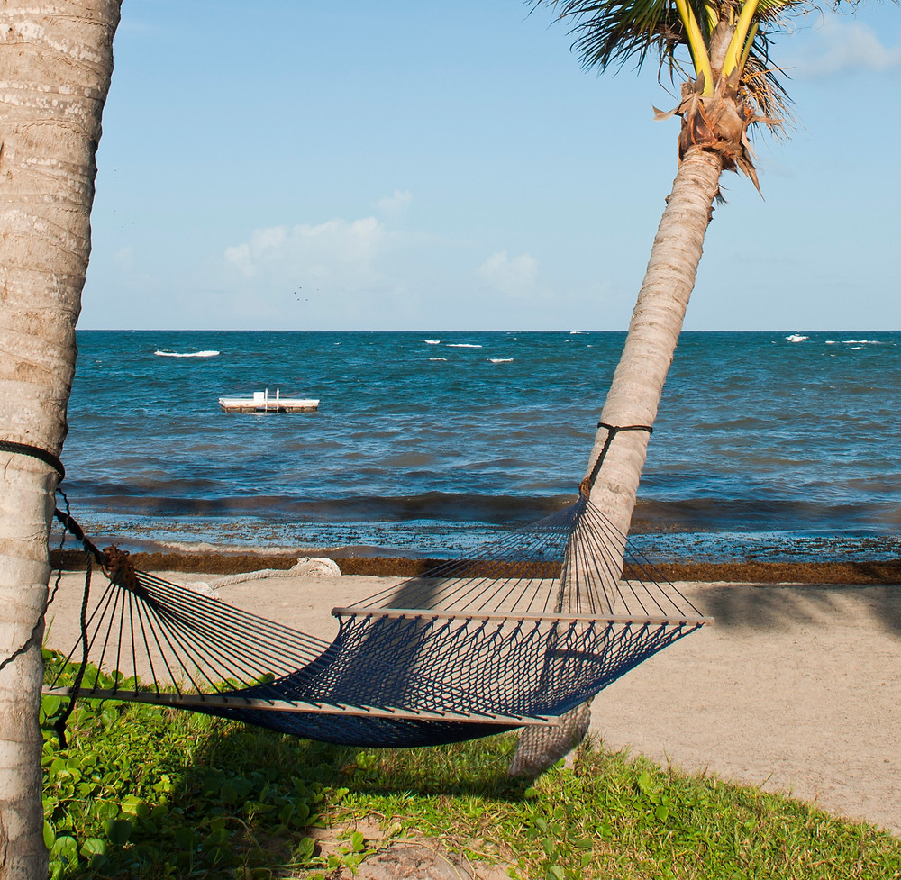 A hammock between two palm trees, overlooking the bay.