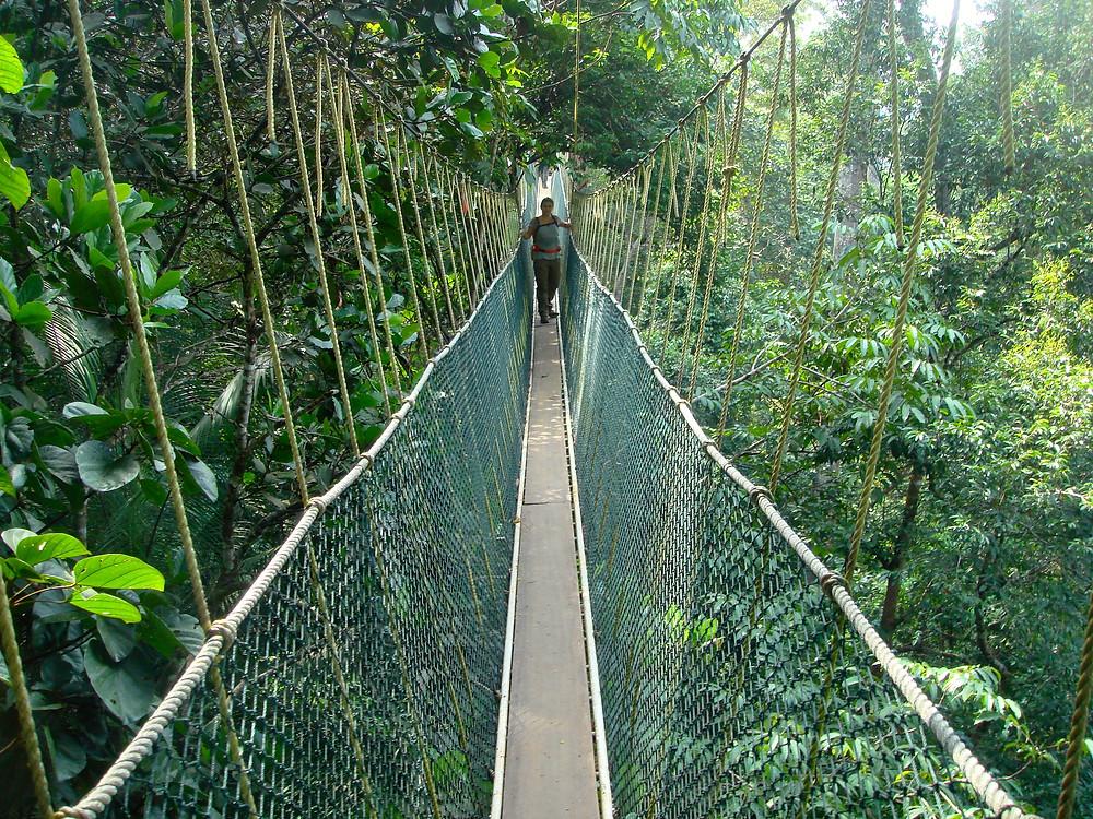 Taman Negara Malaysia Canopy Walk