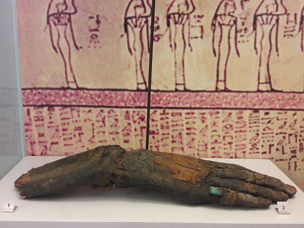 AUB Archaeological Museum - mummified hand