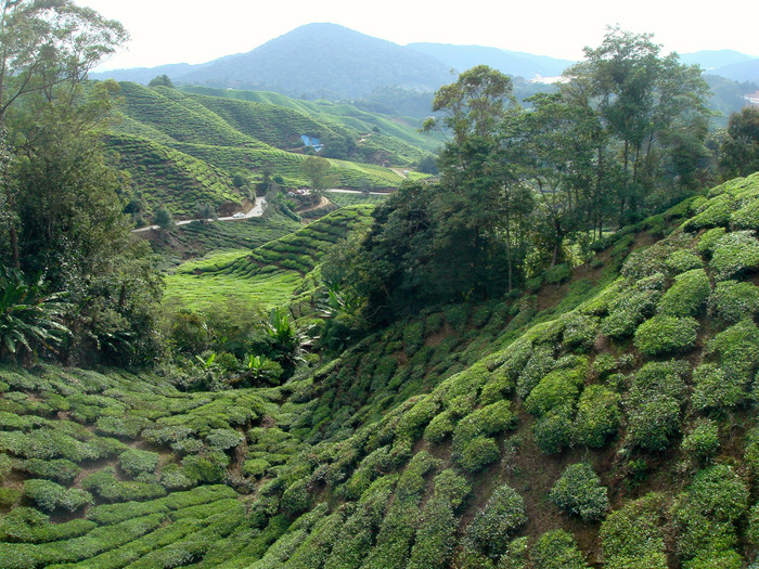 The Highlights of the CAMERON HIGHLANDS