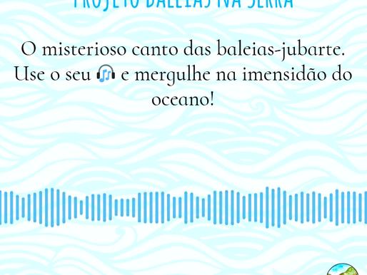Mergulhe no azul do oceano entre a melodia do canto das baleias-jubarte