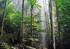 God's Wilderness