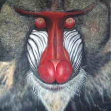 Baboon 140 x 170 cm - Copy.JPG