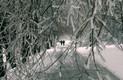 Коломенское. После ледяного дождя / декабрь 2010