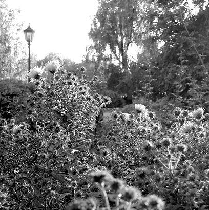 Коломенское, осень