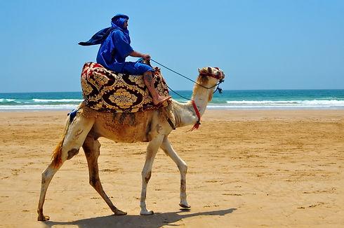 morocco berber riding camel on the atlantic ocean beach