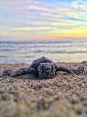 turtle .jpg