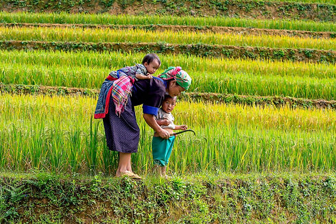 People Rice Paddies Vietnam.jpg
