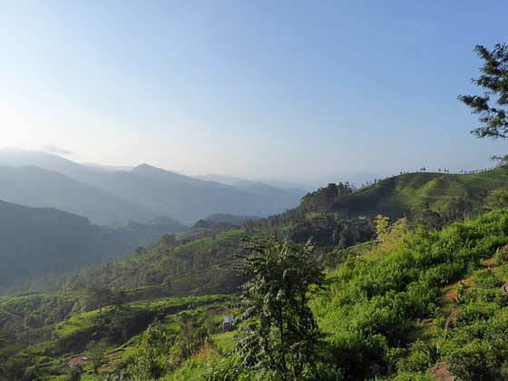 3 weeks in Sri Lanka. Part 6: The Hill Country, Kandy and Negombo with kids.
