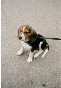Beebob puppy