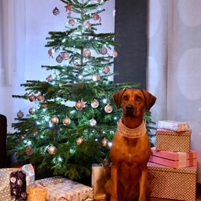 Frohe Weihnachten und ein frohes neues Jahr 2019