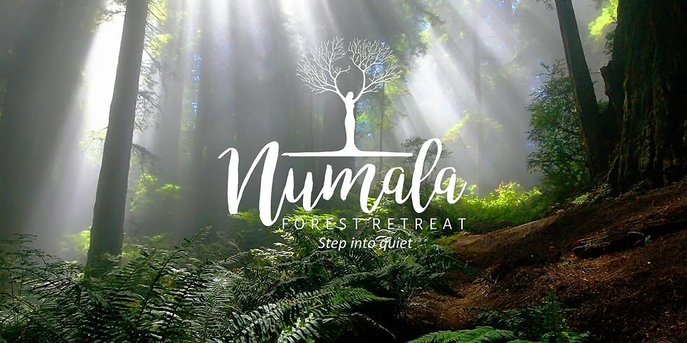 Yoga and Meditation Forest Retreat (One Day): Focus on Pranayama