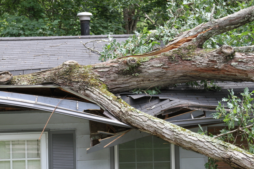 Wind Damage Specialists www.mainlinepublicadjusters