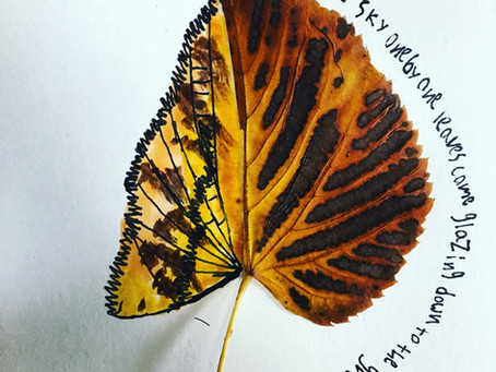 A Study of Botany by Morgan