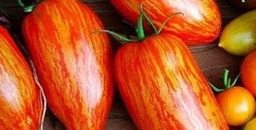 Tomato - Striped Roman