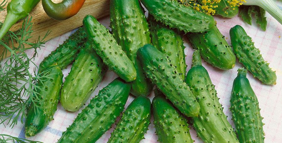Cucumber - Parisian Gherkin