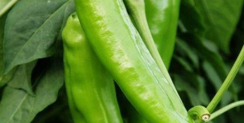 Pepper - Big Jim