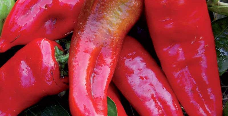 Pepper -Tolli's Sweet Italian
