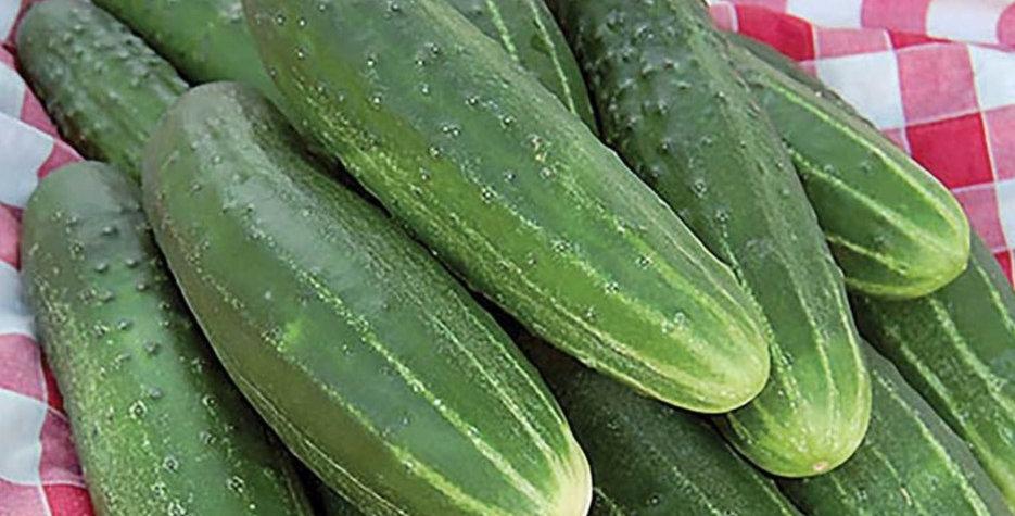 Cucumber - A&C Pickling