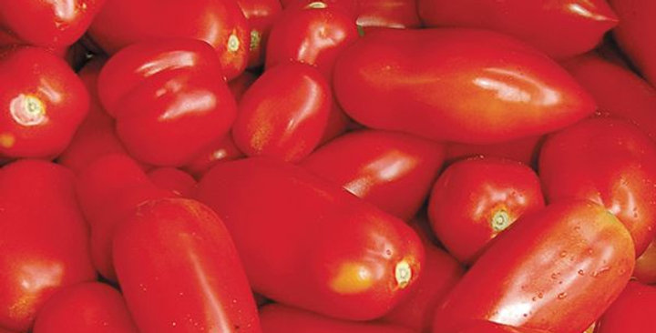 Tomato - San Marzano