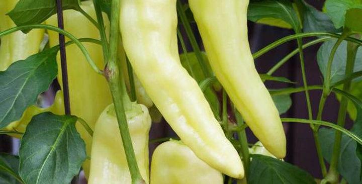 Pepper - Banana