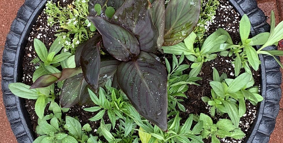 Pre-Planned Premium Sun Pot Plants